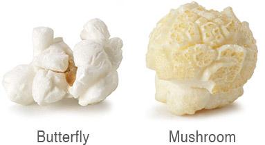 Butterfly Vs Mushroom Popcorn